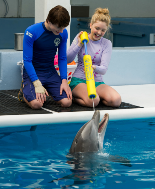Celebrate Homeschool Day with Dolphin Tale 2 - 4 - CK - HSLDA Blog