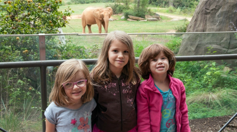 BLG SZ - Our Monkeys Visit the Zoo 1 - Jessica Cole - HSLDA Blog