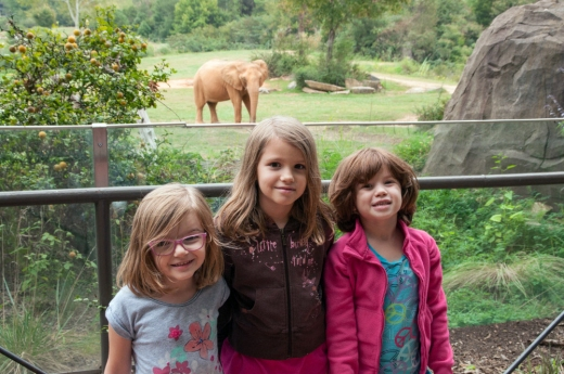 Our Monkeys Visit the Zoo | HSLDA Blog
