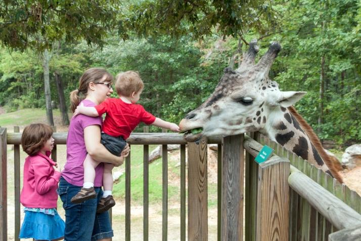 Our Monkeys Visit the Zoo   HSLDA Blog