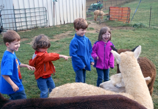 When Alpacas Greet You - Tales of Our Co-Op Adventures | HSLDA Blog