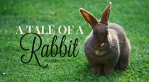 BLG SZ - A Tale of a Rabbit - Sara Jones - HSLDA Blog