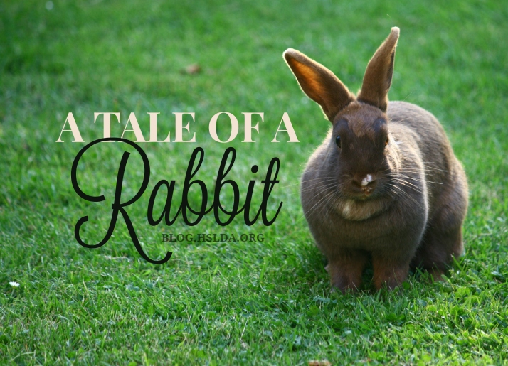 OR - A Tale of a Rabbit - Sara Jones - HSLDA Blog.jpg