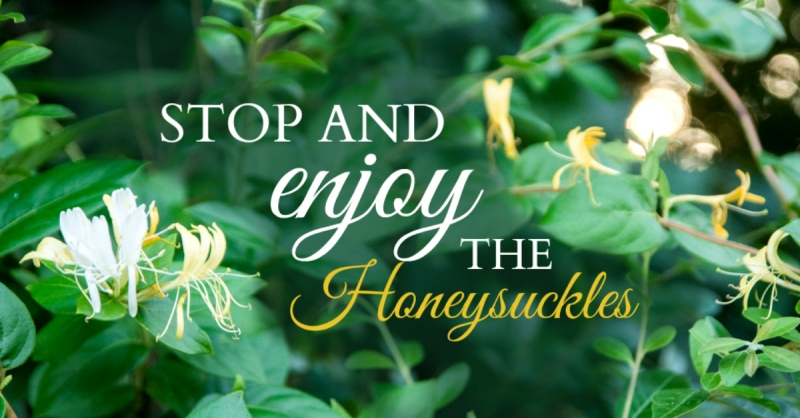BLG & FB IM - Stop and Smell the Honeysuckles 4 - Jessica Cole - HSLDA Blog