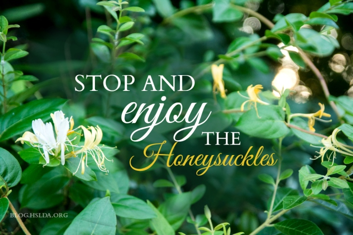 Stop and Enjoy the Honeysuckles