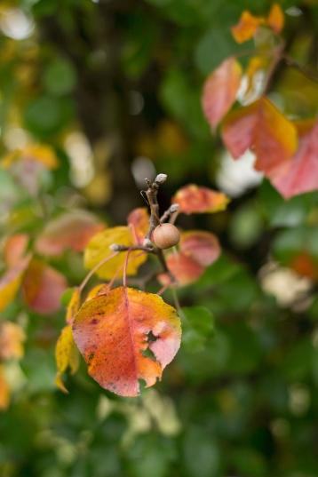 An Attitude of Thankfulness | HSLDA Blog