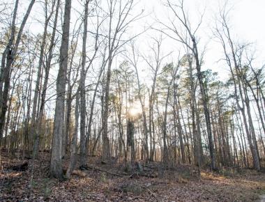 A Nature Walk in Wintertime | HSLDA Blog