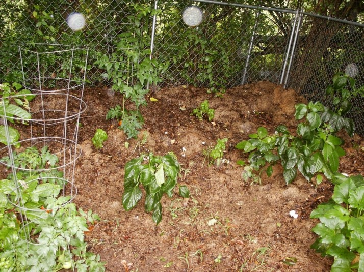 Companion Planting 2 - RF - HSLDA Blog