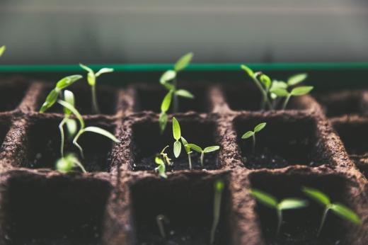 Companion Planting | HSLDA Blog