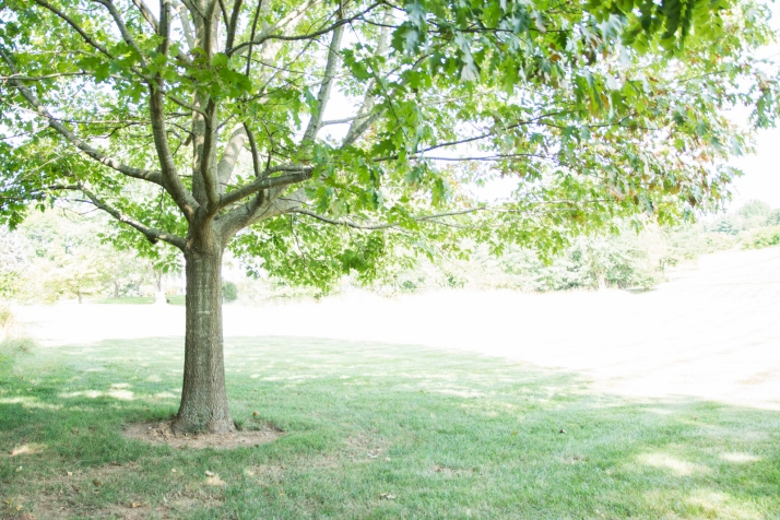 2019_8_15 - Trees Planted by Water_0838